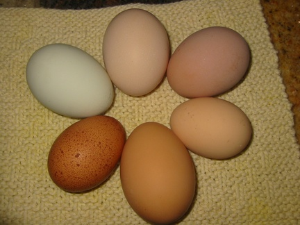 eggselection