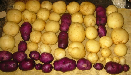 Potato art