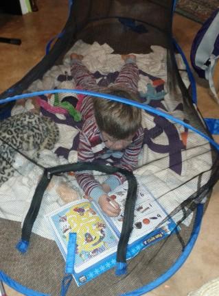 catschooling