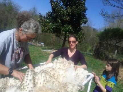 shearing6