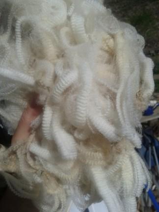 shearing7